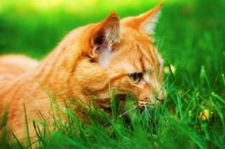 In-home Pet Sitter Loves Orange Cats